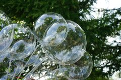 The balls are white transparent on a background of green spruce royalty free stock image