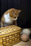 Balls of wool thread and cat Royalty Free Stock Images