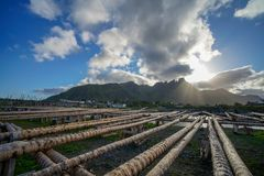 Ballstad, Noruega - 28 de junio de 2018: Estructura de madera en Lofoten para secar pescados imágenes de archivo libres de regalías