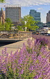 Balltimores Inner Harbor framed by spring flowers. Balltimores Inner Harbor Harbour framed by spring flowers, including catmint Nepeta faassenii and other purple stock photography