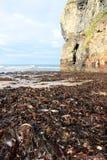 Ballybunion beach cliff seaweed Stock Images