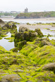 Ballybunion castle algae covered rocks view. Seaweed covered rocks with castle and cliffs on ballybunion beach in county kerry ireland Royalty Free Stock Photography