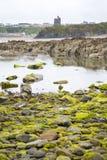 Ballybunions-Schlosskelp bedeckte Felsen Lizenzfreie Stockfotografie