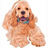 Balneario americano lindo del cocker de la raza del perro del vector que se divierte Fotos de archivo libres de regalías