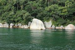 Balneario Camboriu - Santa Catarina - il Brasile - foresta pluviale tropicale Immagine Stock Libera da Diritti