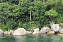 Balneario Camboriu - Santa Catarina - il Brasile - foresta pluviale tropicale Fotografie Stock