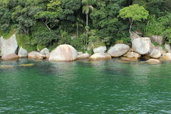 Balneario Camboriu - Santa Catarina - il Brasile - foresta pluviale tropicale Immagini Stock Libere da Diritti