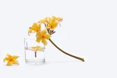 Balneario con las flores y el vaso del frangipani. fotografía de archivo libre de regalías
