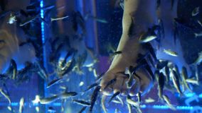 Balneario de los pescados de Pedicure Tratamiento del balneario de los pescados del garra de Rufa metrajes