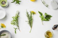 Balneario orgánico ingredientes herbarios naturales del skincare con las hierbas y Imagen de archivo libre de regalías