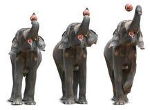Baloncesto del tiroteo del elefante asiático Imagenes de archivo