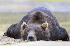 Baloo niedźwiedź Zdjęcia Stock