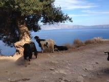 balos克利特海岛盐水湖海景 免版税库存照片
