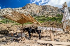 Donkey taxi in Crete island, Greece royalty free stock images