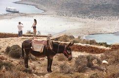 Balosstrand en ezel in Kreta Mediterraan Landschap Griekenland Stock Afbeelding
