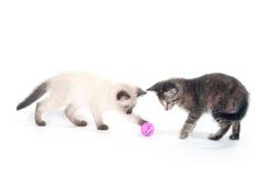 balowe figlarki różowi bawić się dwa Fotografia Stock