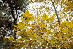 balowy dyskoteki zieleni przedmiota pomarańczowej czerwieni wektoru kolor żółty Obrazy Stock
