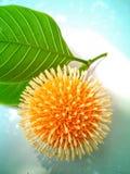 Balowy kwiat Zdjęcia Stock