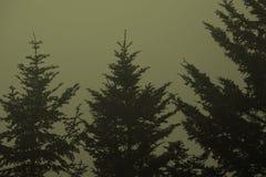Balsam-Bäume Lizenzfreies Stockbild
