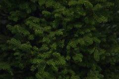 Balsam-gezierter Weihnachtsbaum Lizenzfreie Stockbilder