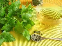 balsam herbata Zdjęcia Stock