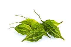 Balsam pear Royalty Free Stock Photography