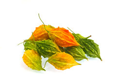 Balsam pear Royalty Free Stock Image