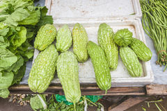 Balsam pear Stock Photography