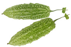 Balsam Pear Bitter Melon Royalty Free Stock Images