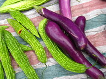 Balsam pear and eggplant Royalty Free Stock Photos