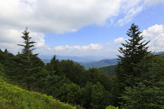 Balsam Trees in the Mountains. North Carolina mountains in the summertime with plenty of balsam trees stock photos