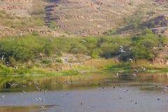 Balsamandmeer in Jodhpur, India stock foto