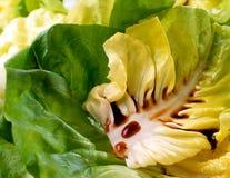 Balsamic vinegar on lettuce. Rich brown Italian balsamic vinegar drizzled over a fresh green lettuce salad stock images