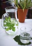 balsamu świeża liść cytryny mennicy woda Obraz Royalty Free
