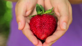 Balshoy, fresh, juicy strawberries in the hands of a person Royalty Free Stock Images
