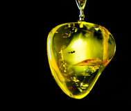 Baltic amber on black background Stock Photography