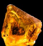 Baltic amber with frozen in this piece a fly, macro photo stock photo