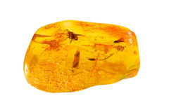 Baltic amber with inclusion. Stock Photography