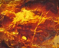 Baltic amber, resin segments Royalty Free Stock Image