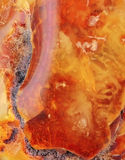 Baltic amber Stock Photo
