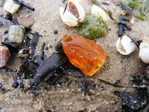 Baltic amber after a storm Royalty Free Stock Photo
