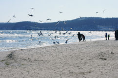 Baltic beach with gulls Royalty Free Stock Image