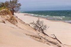 Baltic beach with sea and tree. Landscape blue sea with wild beach stock photo