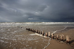 Baltic Beach with Wooden Pales Royalty Free Stock Photography