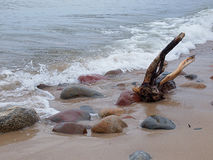 Baltic climates. Snag ejected from the Baltic Sea and rocks on the coast in Rozewie Stock Image