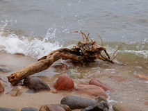 Baltic climates. Snag ejected from the Baltic Sea and rocks on the coast in Rozewie Royalty Free Stock Photos
