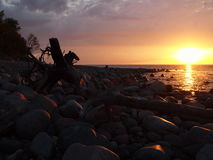 Baltic climates. Stones, roots, trees and sun evening time on the Baltic Sea Stock Image