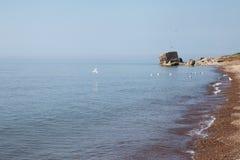 Baltic coast. Stock Photography