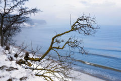 The Baltic coast in the winter. Coast of Baltic sea covered by a snow and a lonely tree Stock Photo