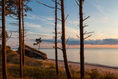 Baltic forest Stock Images